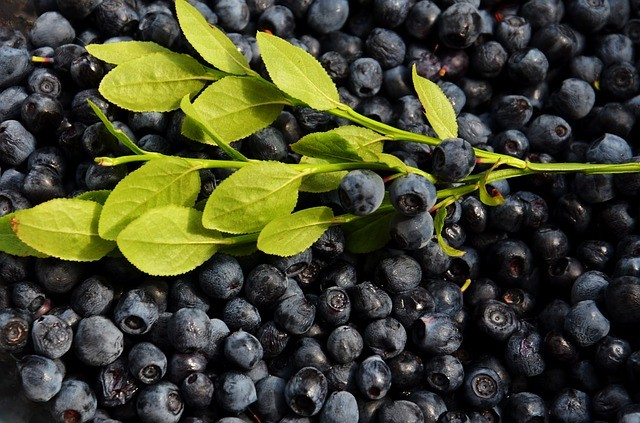 blueberries-926593_640