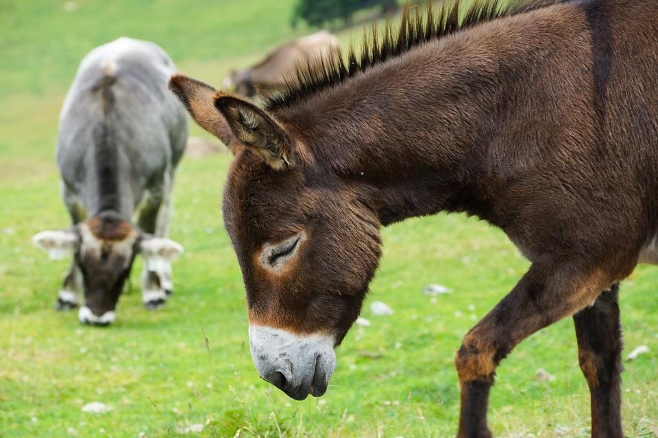 donkey-335974_960_720