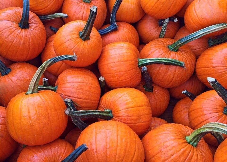 fall-950442_960_720