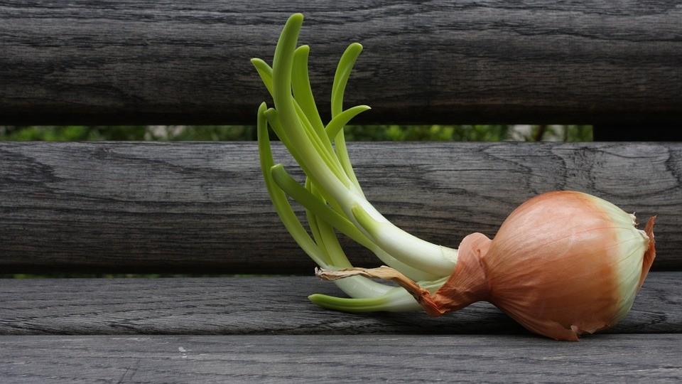 onion-341654_960_720