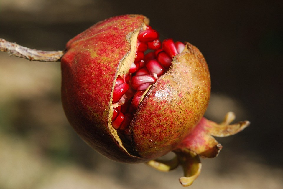 pomegranate-185456_960_720