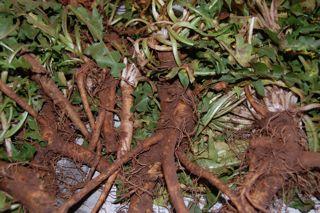 dandelion-root-coffee-1.jpg