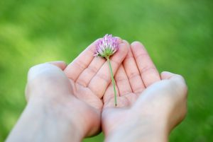 flower-8539_960_720-1
