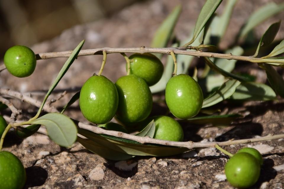 olives-1757221_960_720