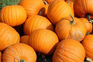 pumpkins-457716_960_720