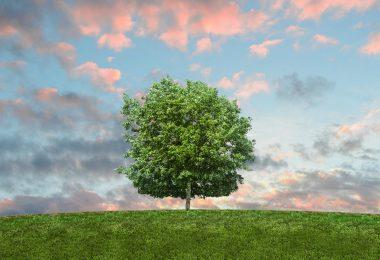 Nature, sky